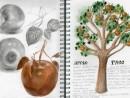 moment one tree apple portofolio 130x98 Portofoliu artistic Universitati din Anglia, Olanda, Danemarca, Italia