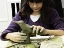 Grup Modelaj Modelaj in lut Pasare Colibri Alexandra 130x98 Atelier modelaj