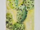 Scoala De Vara Acuarela Gradina Botanica Studiu Plante Cactus Sinziana 130x98 Scoala de Vara, 2015