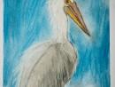 Scoala De Vara Desen Pastel Cretat Pelicani Julia 130x98 Scoala de Vara, 2015