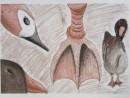 Scoala De Vara Desen Sepia Carbune Gradina Zoologica Studiu Animale Gasca Briana 130x98 Scoala de Vara, 2015