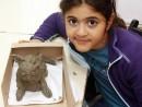 Clasa 10 14 ani Modelaj Lut Pisica Chloe. 130x98 Rezultate de exceptie la cursurile de modelaj